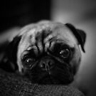 The Pug and the Kindness Message by Corri Gryting Gutzman