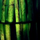 Grünes Makro von Mariia Sorokina