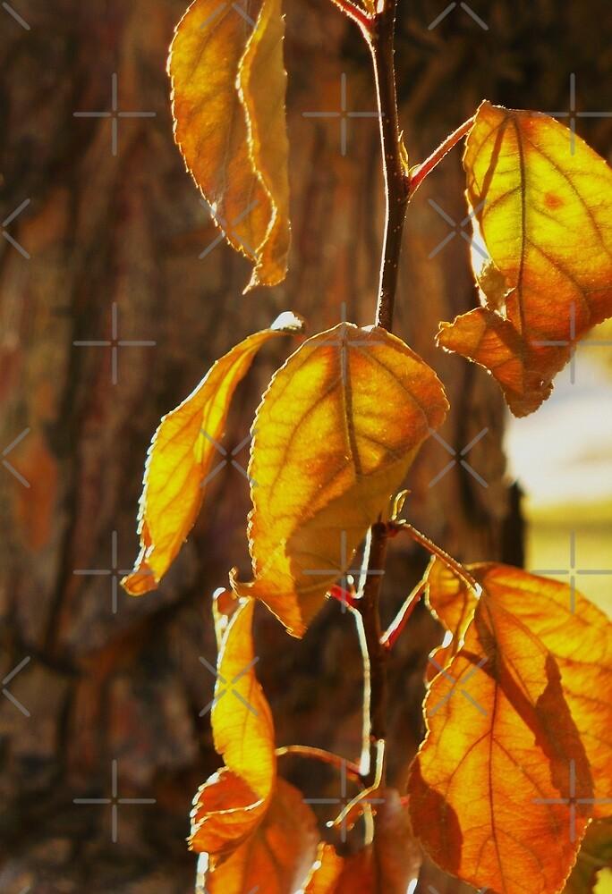 Autumn splendor♥ by Linda Bianic