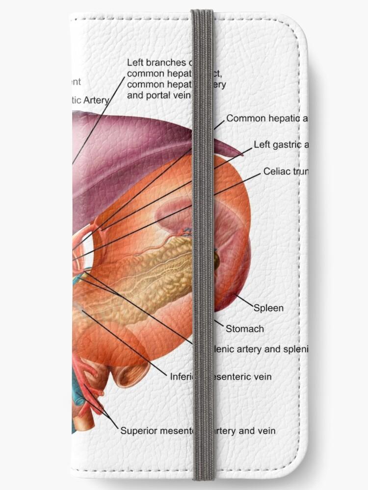 Fundas tarjetero para iPhone «Anatomía del hígado, vista antero ...