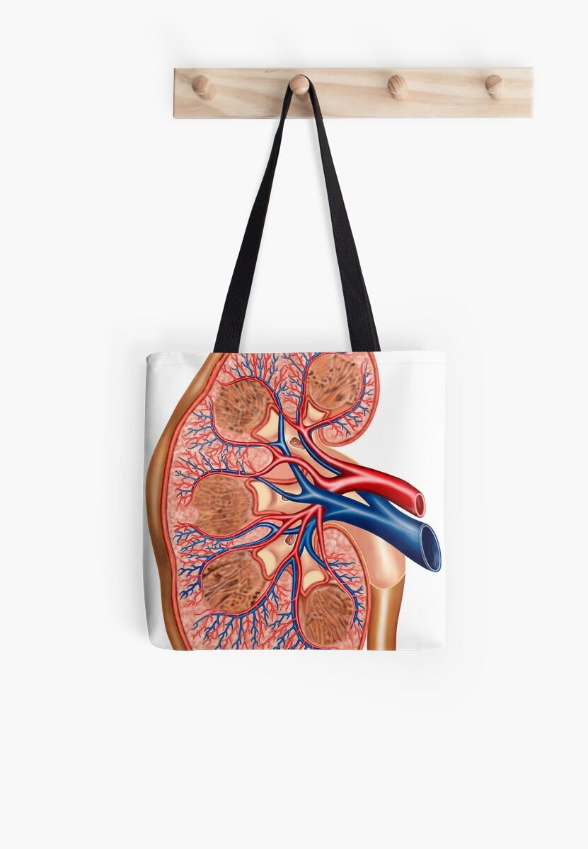 Bolsas de tela «Sección transversal de la anatomía interna del riñón ...