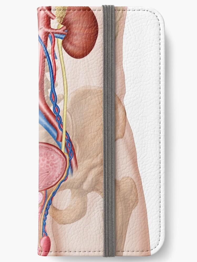 Fundas tarjetero para iPhone «Anatomía del sistema urinario ...