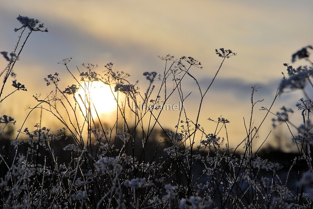 Winter Sun by Lindamell