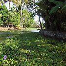 Weeds, plants, boats and lots of greenery by ashishagarwal74