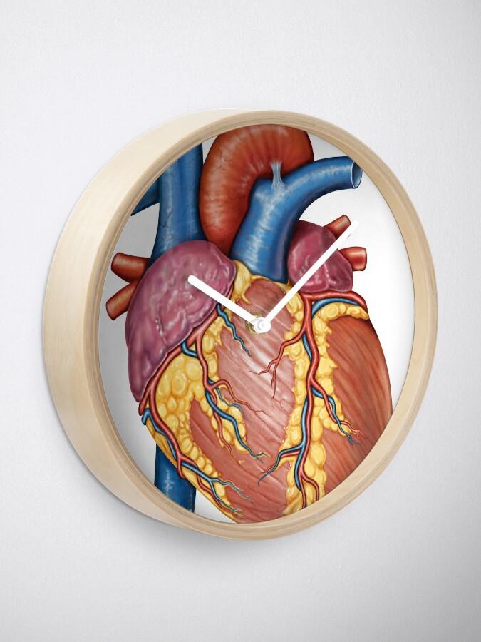 Gross Anatomy Heart