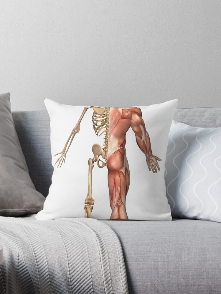 Cojines «El esqueleto humano y el sistema muscular, vista posterior ...