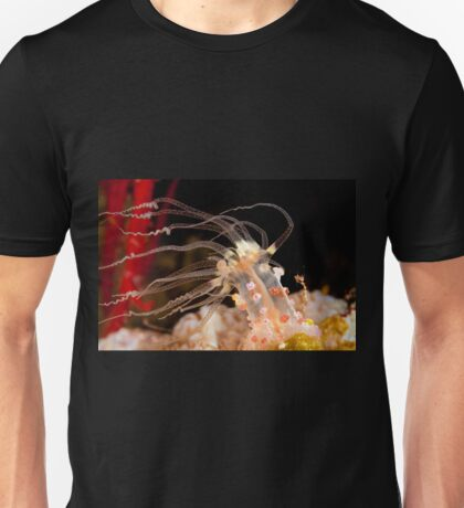 Night anemone, Wakatobi National Park, Indonesia T-Shirt