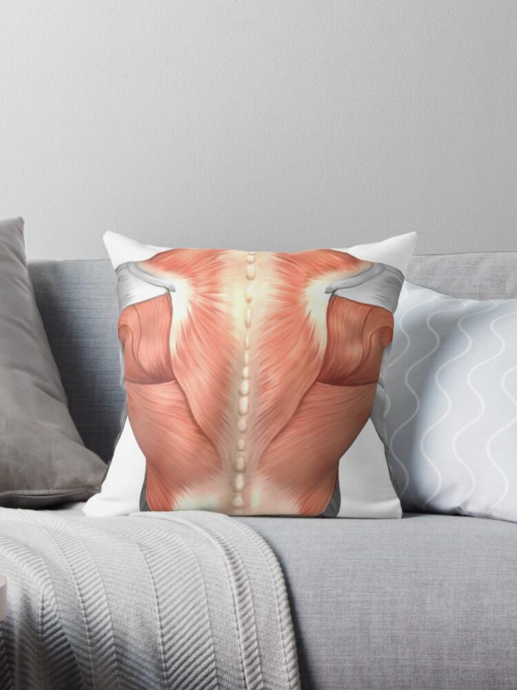 Cojines «Anatomía del músculo masculino de la espalda humana.» de ...