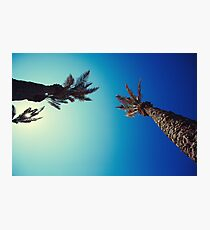 Palm tree with bright blue sky Photographic Print