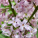 In A Sea Of Lilacs by Kathilee