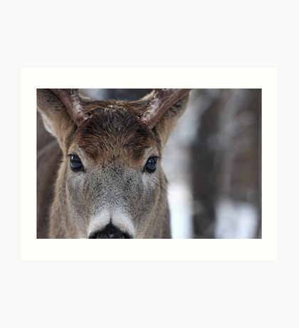 White-tailed Deer Buck up close and personal Art Print