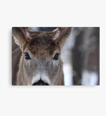 White-tailed Deer Buck up close and personal Canvas Print