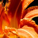 Daylily Macro by ctheworld