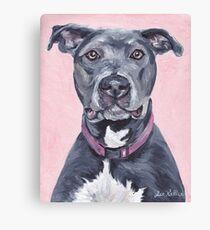 Pit Bull Dog Art Canvas Print