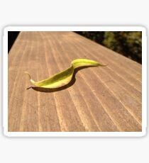 S-Curve Shaped Leaf on Wood Sticker