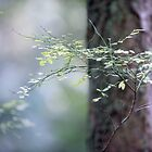 Light on leaves in the forest by Jan Timmons