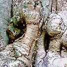 Gnarled Tree Trunk by Shulie1