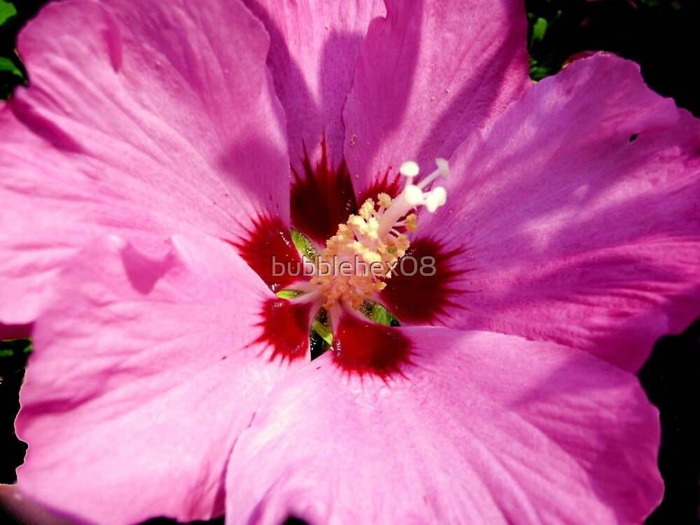 Rosemallow - hibiscus syriacus by bubblehex08