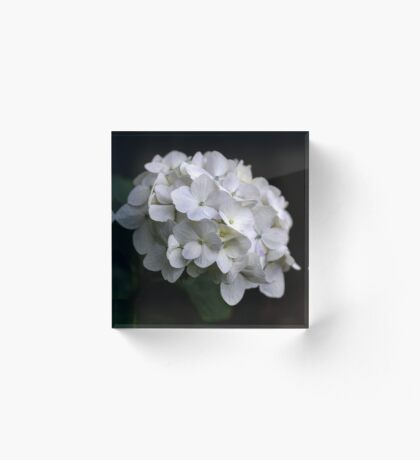I love a White Hydrangea don't you? Acrylic Block