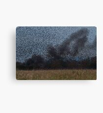 Starling Roost! Canvas Print
