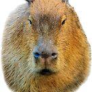 Capybara head by Dave  Knowles
