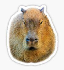 Capybara head Sticker