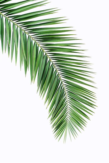 Peaceful image for palm leaf printable