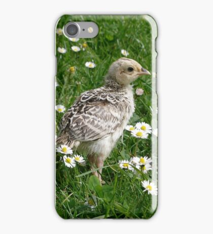 Piep in a sea of Daisies iPhone Case/Skin
