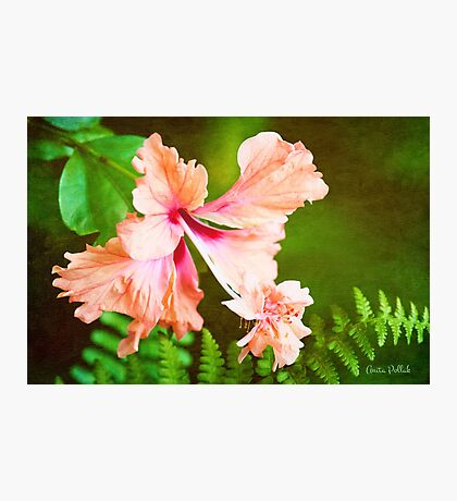 Showy Hibiscus Amid the Greenery Photographic Print