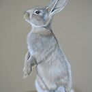 Sitting Tall Bunny Colored Pencil Drawing by Charlotte Yealey
