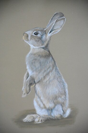 Sitting Tall Bunny Colored Pencil Drawing Posters By Charlotte