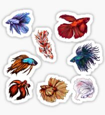 Betta fishes Sticker