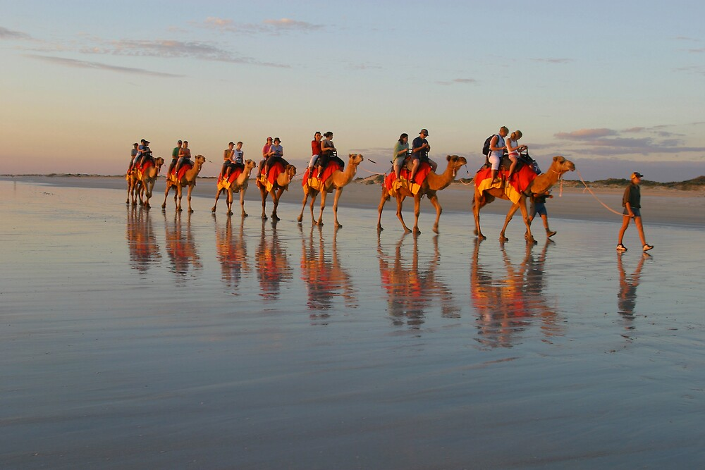 Camels on Cable Beach by Mark Williamson