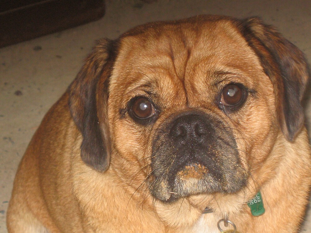 Pugalier (a fat one) by Pilgrim