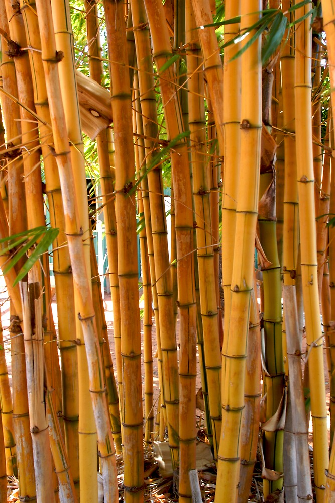 Bamboo by Mark Williamson