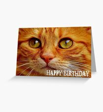 Happy Birthday Greeting Cute Cat Card Greeting Card
