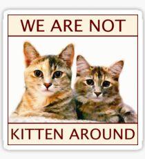 We Are Not Kitten Around Sticker