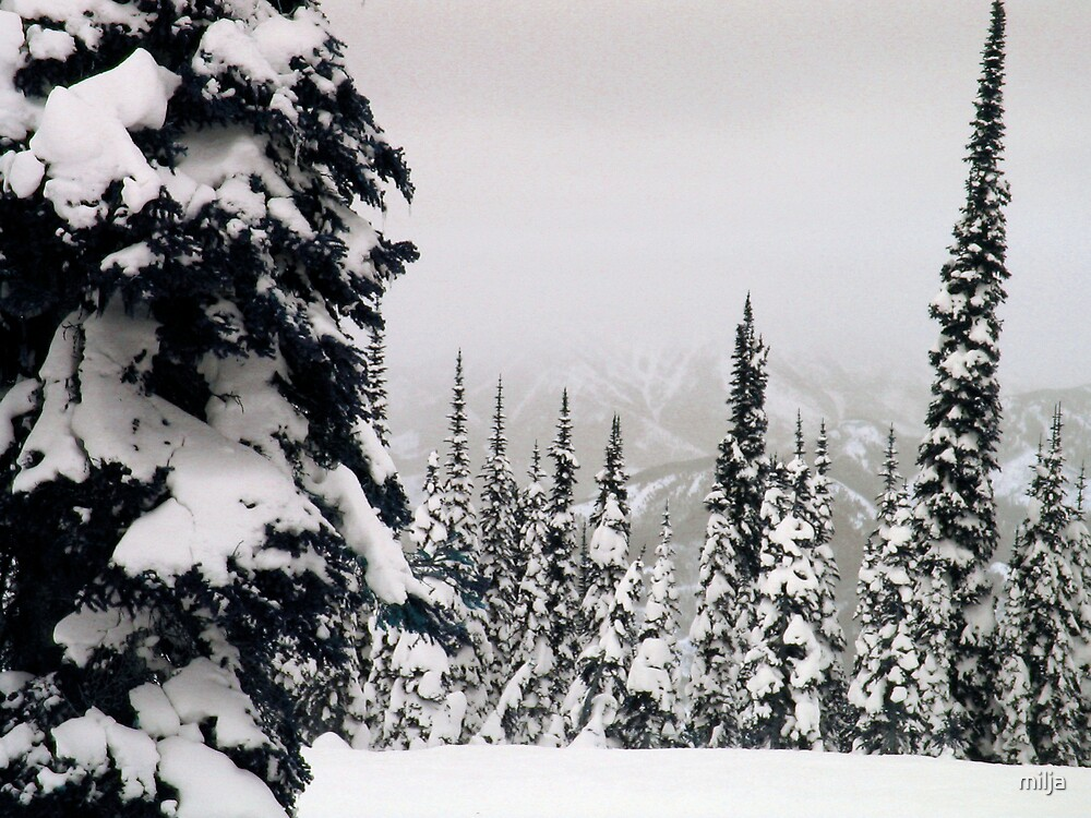 Winter Wonderland by milja