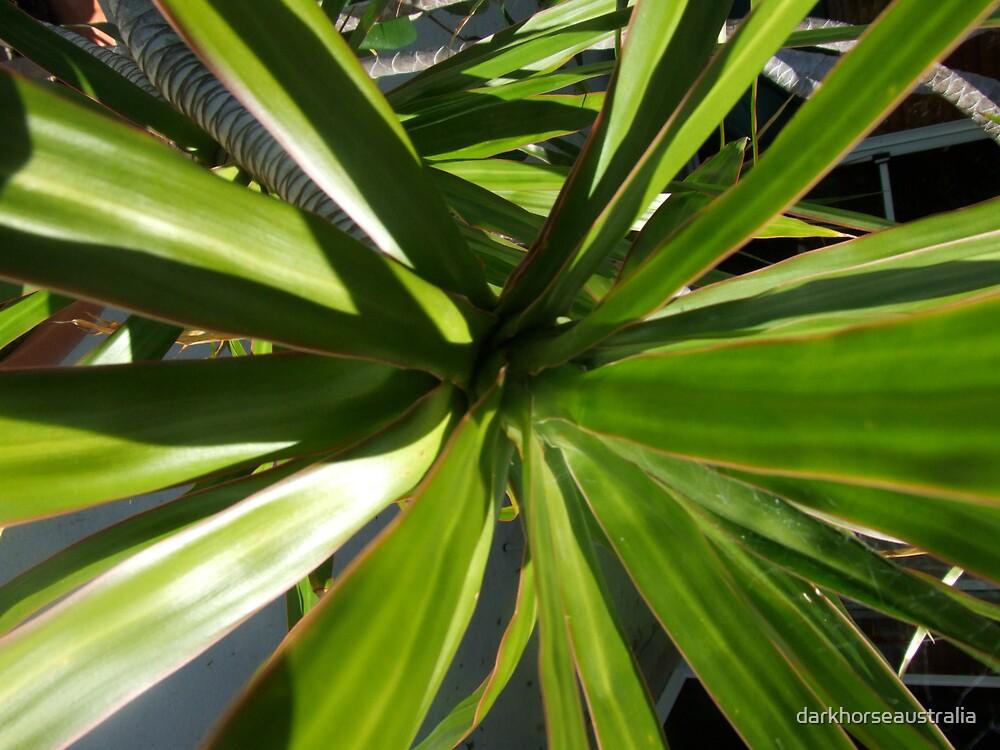 Green Fern by darkhorseaustralia
