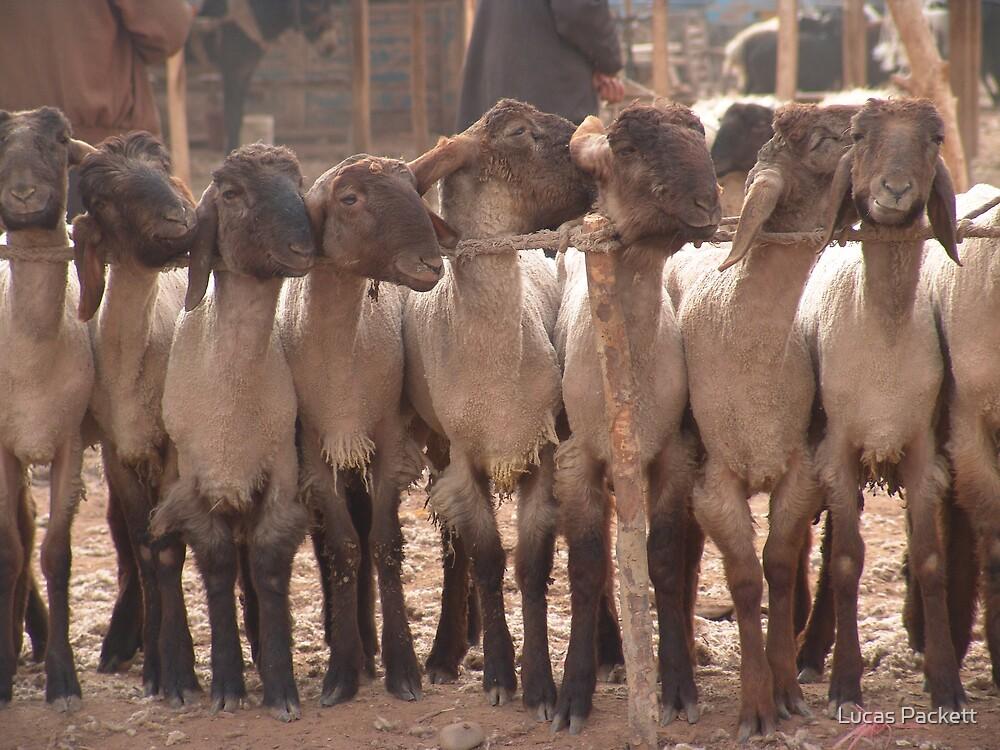 Kashgar, Animal Market by Lucas Packett