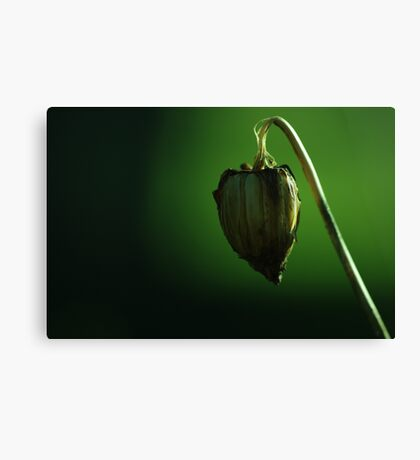 suspended heart Canvas Print