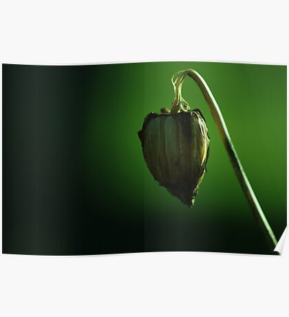 suspended heart Poster