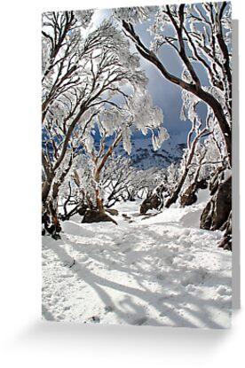 Snowgums by David Sundstrom