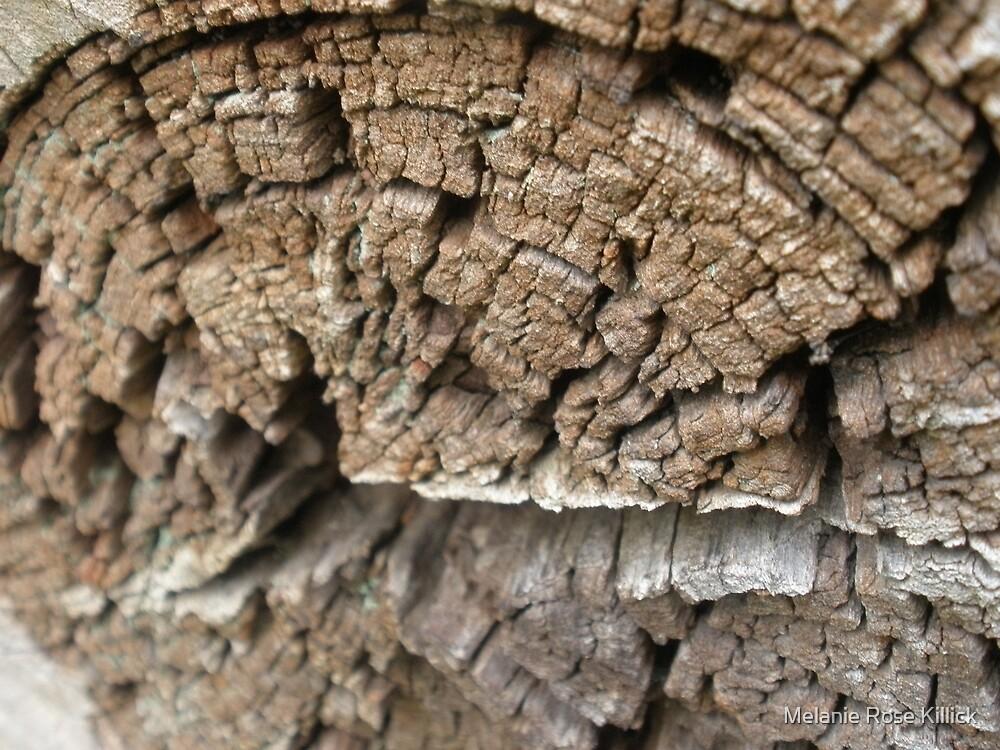 Secrets of a tree by Melanie Rose Killick