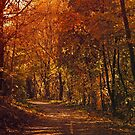 Autumnal Path by SanjayKalyan