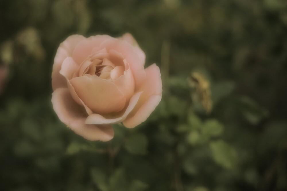 Nostolgia in Soft Pink by Rhys Allen