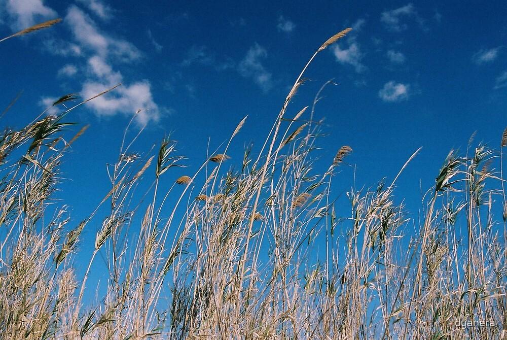 Wheat in the sky by dyanera