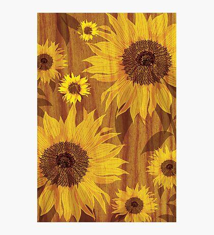 Sunflower on woodgrain Photographic Print