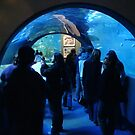 Oceanarium by Ameel Khan