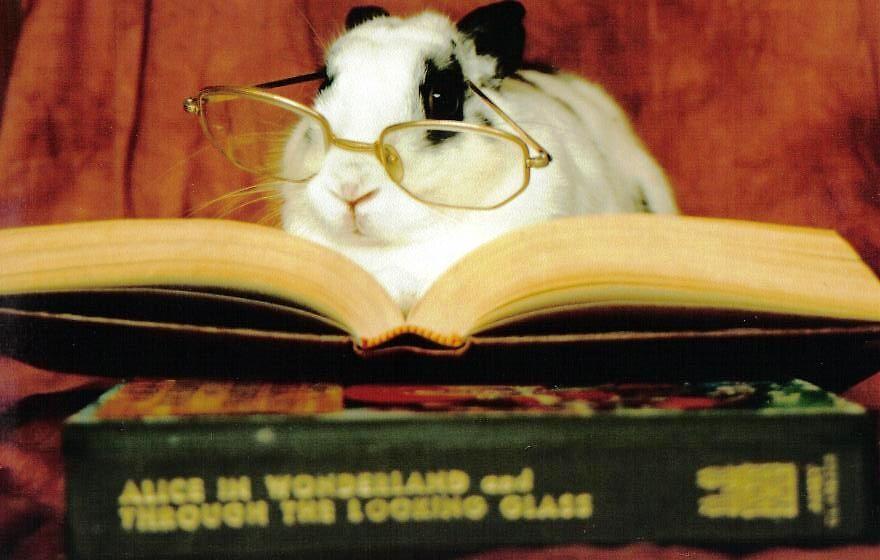 The White Rabbit by Tanya Menzies